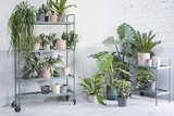 Planten & decoratie rek Large Army green